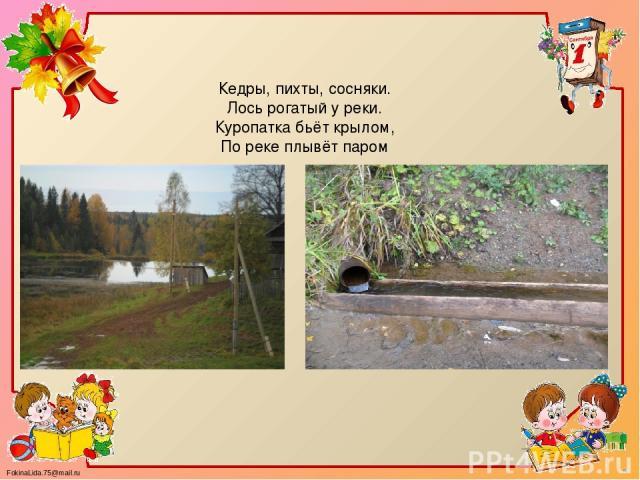 Кедры, пихты, сосняки. Лось рогатый у реки. Куропатка бьёт крылом, По реке плывёт паром FokinaLida.75@mail.ru