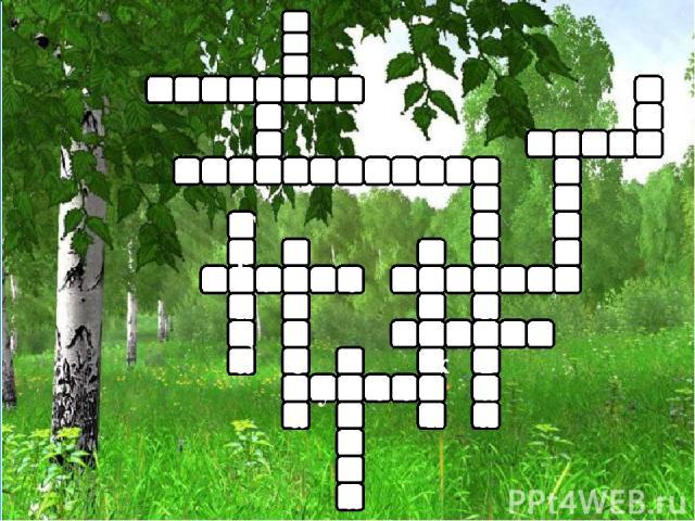 с т у с б е р ё з а е р ё ж и к о о л о н б е р е с а о Т р а ц и п к а р л к я а в и
