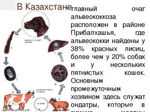В Казахстане главный очаг альвеококкоза расположен в районе Прибалхашья, где аль
