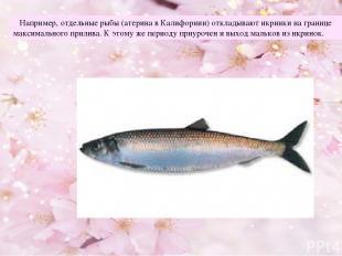 Например, отдельные рыбы (атерина в Калифорнии) откладывают икринки на границе м