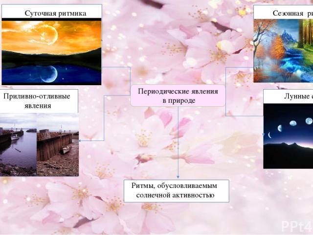 Периодические явления в природе Сезонная ритмика Суточная ритмика Приливно-отливные явления Ритмы, обусловливаемым солнечной активностью Лунные фазы