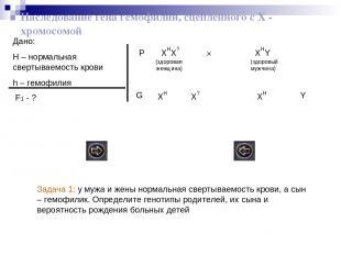 Наследование гена гемофилии, сцепленного с Х - хромосомой Дано: H – нормальная с
