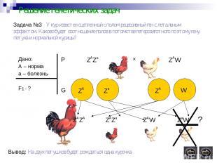 Решение генетических задач Задача №3 У кур известен сцепленный с полом рецессивн