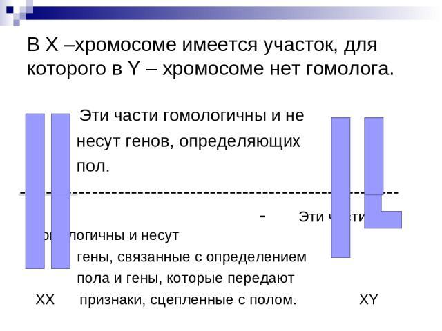 В Х –хромосоме имеется участок, для которого в Y – хромосоме нет гомолога. Эти части гомологичны и не несут генов, определяющих пол. ---------------------------------------------------------- - Эти части не гомологичны и несут гены, связанные с опре…