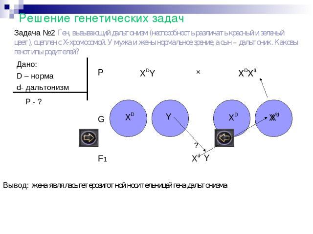 Решение генетических задач Задача №2 Ген, вызывающий дальтонизм (неспособность различать красный и зеленый цвет), сцеплен с Х-хромосомой. У мужа и жены нормальное зрение, а сын – дальтоник. Каковы генотипы родителей? Дано: D – норма d- дальтонизм P …