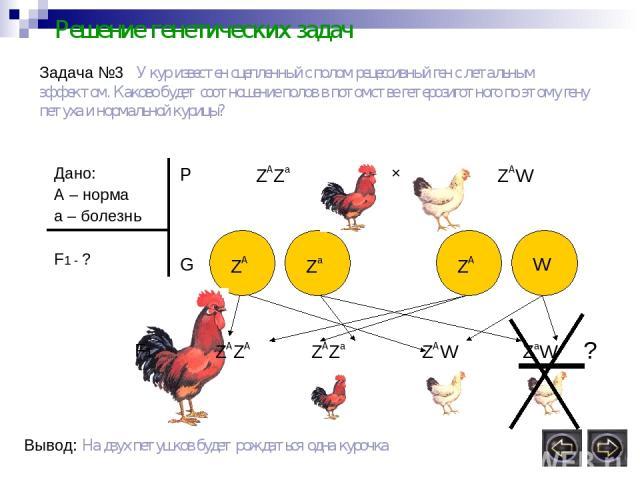 Решение генетических задач Задача №3 У кур известен сцепленный с полом рецессивный ген с летальным эффектом. Каково будет соотношение полов в потомстве гетерозиготного по этому гену петуха и нормальной курицы? Дано: А – норма а – болезнь F1 - ? P ZA…