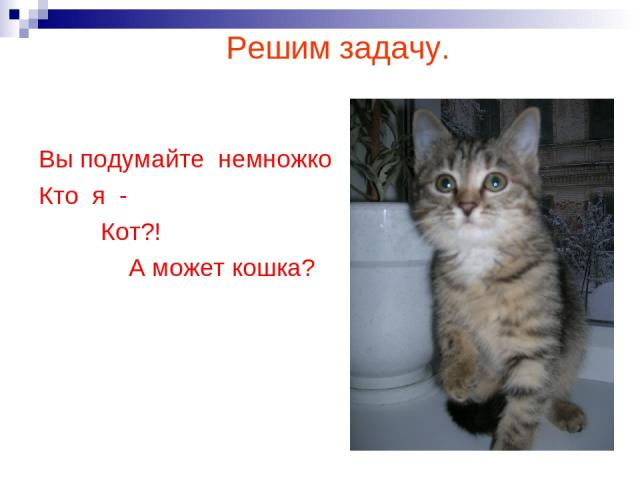 ВВы подумайте немножко Кто я- Кот?! А может кошка? Решим задачу. Вы подумайте немножко Кто я - Кот?! А может кошка?