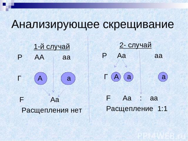 Анализирующее скрещивание 1-й случай Р АА аа Г А а F Аа Расщепления нет 2- случай Р Аа аа Г А а а F Аа : аа Расщепление 1:1