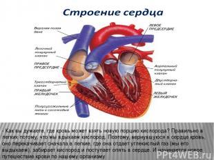 - Как вы думаете, где кровь может взять новую порцию кислорода? Правильно в легк