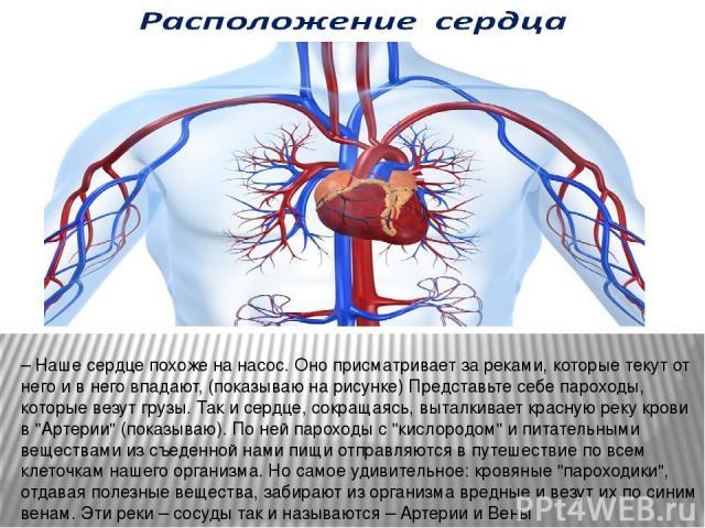 – Наше сердце похоже на насос. Оно присматривает за реками, которые текут от него и в него впадают, (показываю на рисунке) Представьте себе пароходы, которые везут грузы. Так и сердце, сокращаясь, выталкивает красную реку крови в