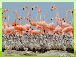 48 кв.км – фламинго 28 кв.км – чайка 8 кв.км – пингвин