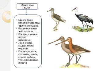 Животные болот Европейскаяболотная черепаха(Emys orbicularis). Различные виды