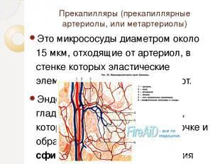 Прекапилляры (прекапиллярные артериолы, или метартериолы) Это микрососуды диамет