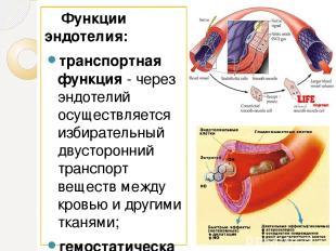 Функции эндотелия: транспортная функция- через эндотелий осуществляется избират