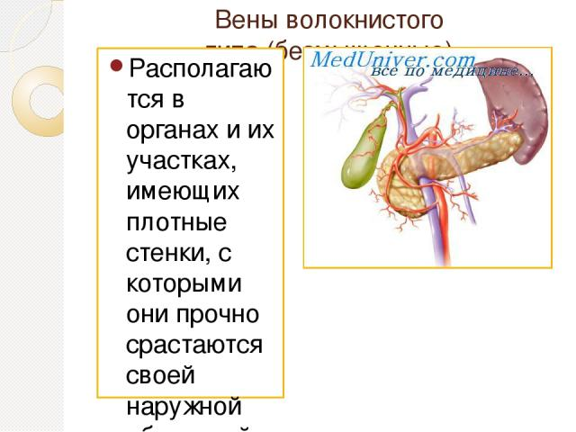 Вены волокнистого типа(безмышечные) Располагаются в органах и их участках, имеющих плотные стенки, с которыми они прочно срастаются своей наружной оболочкой. К венам этого типа относят безмышечные вены мозговых оболочек, вены сетчатки глаза, вены к…