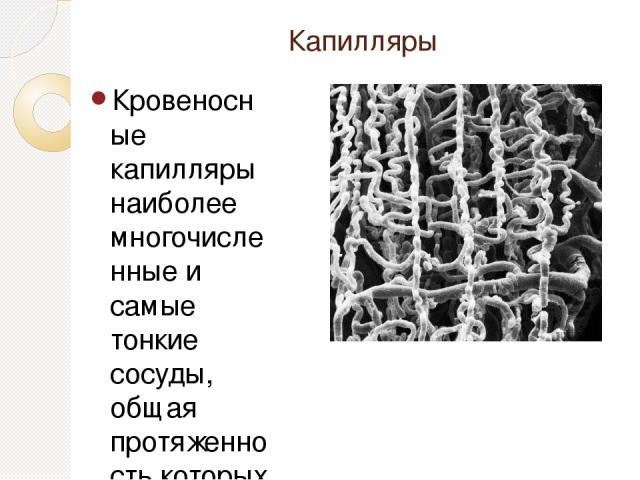 Капилляры Кровеносные капилляры наиболее многочисленные и самые тонкие сосуды, общая протяженность которых в организме превышает 100 тыс. км. В большинстве случаев капилляры формируют сети, однако они могут образовывать петли, а также клубочки. В об…