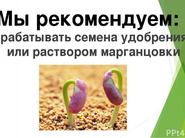 Обрабатывать семена удобрениями или раствором марганцовки Мы рекомендуем: