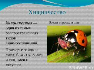 Хищничество Хищничество — один из самых распространенных типов взаимоотношений.