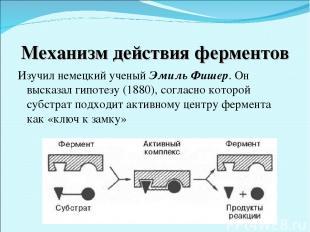 Механизм действия ферментов Изучил немецкий ученый Эмиль Фишер. Он высказал гипо