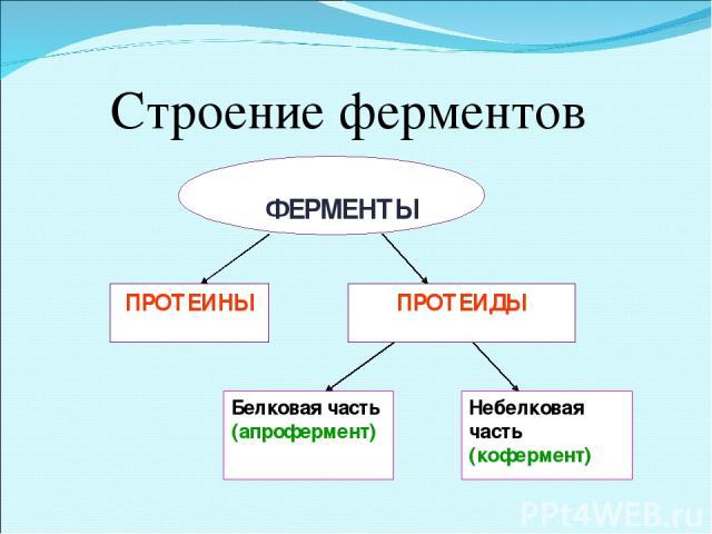 Строение ферментов