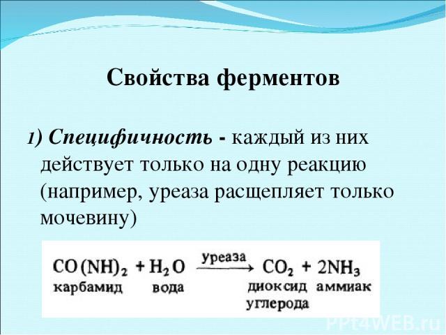 Свойства ферментов 1) Специфичность - каждый из них действует только на одну реакцию (например, уреаза расщепляет только мочевину)