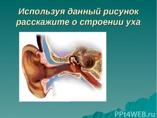 Используя данный рисунок расскажите о строении уха