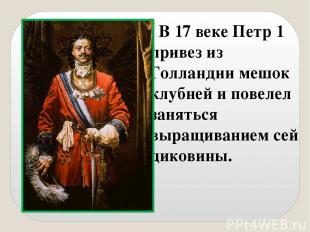 В 17 веке Петр 1 привез из Голландии мешок клубней и повелел заняться выращивани