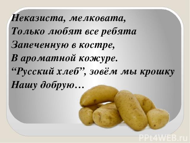 """Неказиста, мелковата, Только любят все ребята Запеченную в костре, В ароматной кожуре. """"Русский хлеб"""", зовём мы крошку Нашу добрую…"""