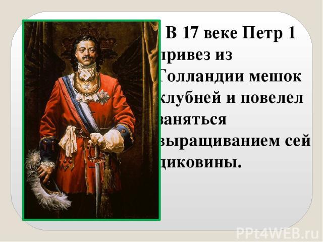 В 17 веке Петр 1 привез из Голландии мешок клубней и повелел заняться выращиванием сей диковины.