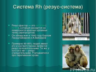 Система Rh (резус-система) Резус-фактор— это антиген (белок), который находится