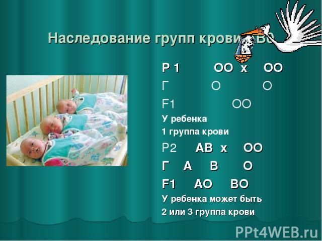 Наследование групп крови AB0 Р 1 ♂ ОО x ♀ ОО Г О О F1 ОО У ребенка 1 группа крови Р2 ♂ АВ x ♀ ОО Г А В О F1 АО ВО У ребенка может быть 2 или 3 группа крови