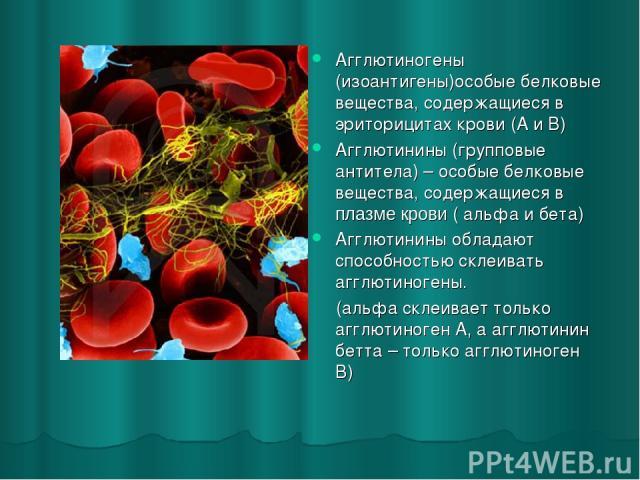 Агглютиногены (изоантигены)особые белковые вещества, содержащиеся в эриторицитах крови (А и В) Агглютинины (групповые антитела) – особые белковые вещества, содержащиеся в плазме крови ( альфа и бета) Агглютинины обладают способностью склеивать агглю…