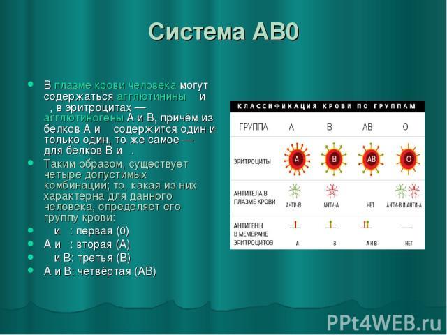 Система AB0 В плазме крови человека могут содержаться агглютинины α и β, в эритроцитах— агглютиногены A и B, причём из белков A и α содержится один и только один, то же самое— для белков B и β. Таким образом, существует четыре допустимых комбинаци…