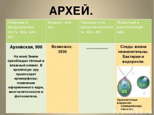 АРХЕЙ. Одноклеточные водоросли: хламидомонада; хлорелла. Название ипродолжитель