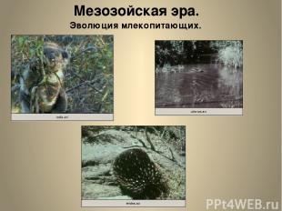 Мезозойская эра. Эволюция млекопитающих.