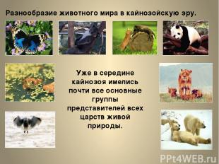 Разнообразие животного мира в кайнозойскую эру. Уже в середине кайнозоя имелись