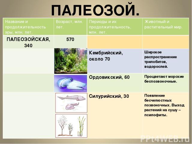 ПАЛЕОЗОЙ. Название и продолжительность эры, млн.лет. Возраст, млн. лет. Периоды и их продолжительность, млн. лет. Животный и растительный мир. ПАЛЕОЗОЙСКАЯ, 340 570 Кембрийский, около 70 Широкое распространение трилобитов, водорослей. Ордовикский,60…