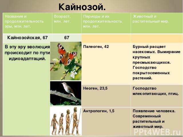 Кайнозой. Название и продолжительность эры, млн.лет. Возраст, млн. лет. Периоды и их продолжительность, млн. лет. Животный и растительный мир. Кайнозойская,67 67 В эту эру эволюция происходит по пути идиоадаптаций. Палеоген, 42 Бурный расцветнасеком…