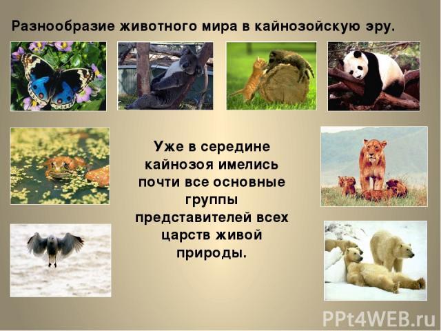 Разнообразие животного мира в кайнозойскую эру. Уже в середине кайнозоя имелись почти все основные группы представителей всех царств живой природы.