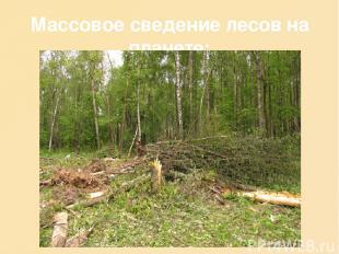 Массовое сведение лесов на планете: