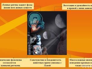Многосложные явления вроде поведения крупных коллективов также связаны с Луной.