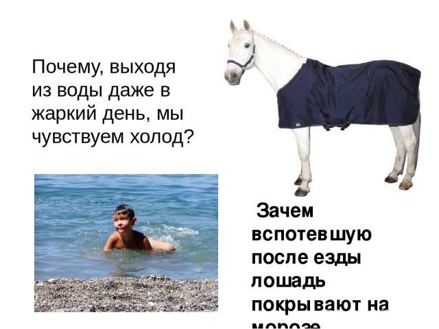 Почему, выходя из воды даже в жаркий день, мы чувствуем холод? Зачем вспотевшую после езды лошадь покрывают на морозе попоной?