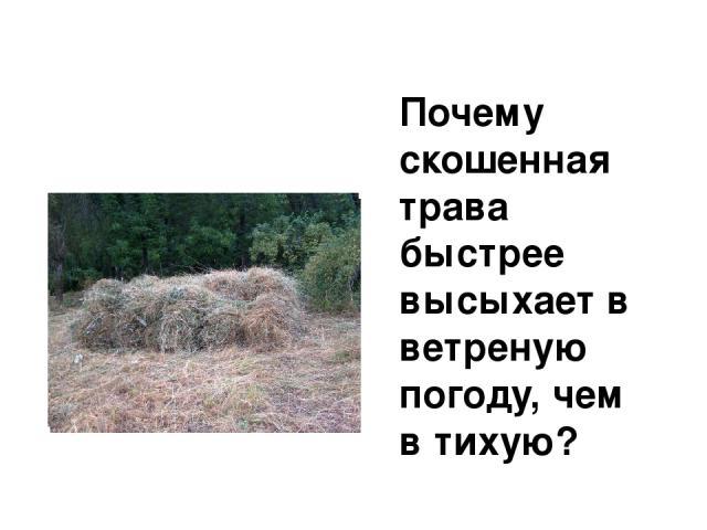 Почему скошенная трава быстрее высыхает в ветреную погоду, чем в тихую?