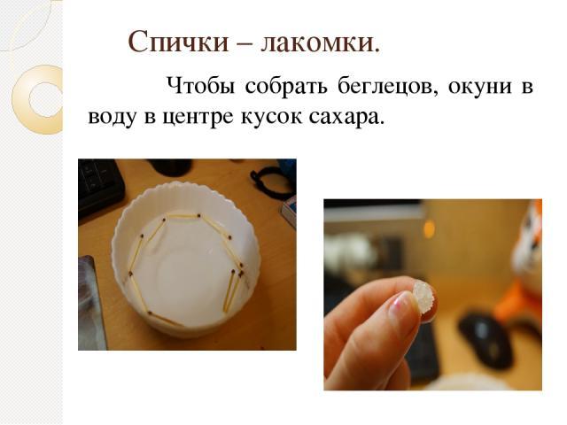 Спички – лакомки. Чтобы собрать беглецов, окуни в воду в центре кусок сахара.