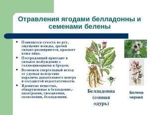 Отравления ягодами белладонны и семенами белены Появляется сухость во рту, ощуще