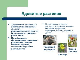 Ядовитые растения Отравления, связанные с действием на слизистую оболочку пищева