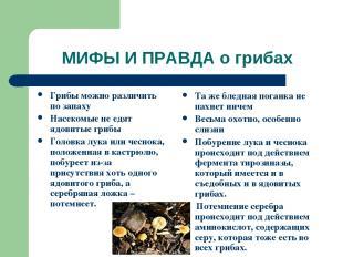 МИФЫ И ПРАВДА о грибах Грибы можно различить по запаху Насекомые не едят ядовиты