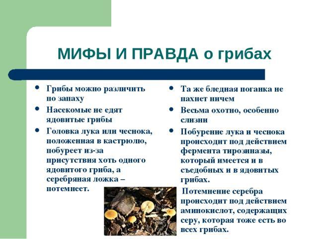 МИФЫ И ПРАВДА о грибах Грибы можно различить по запаху Насекомые не едят ядовитые грибы Головка лука или чеснока, положенная в кастрюлю, побуреет из-за присутствия хоть одного ядовитого гриба, а серебряная ложка – потемнеет. Та же бледная поганка не…