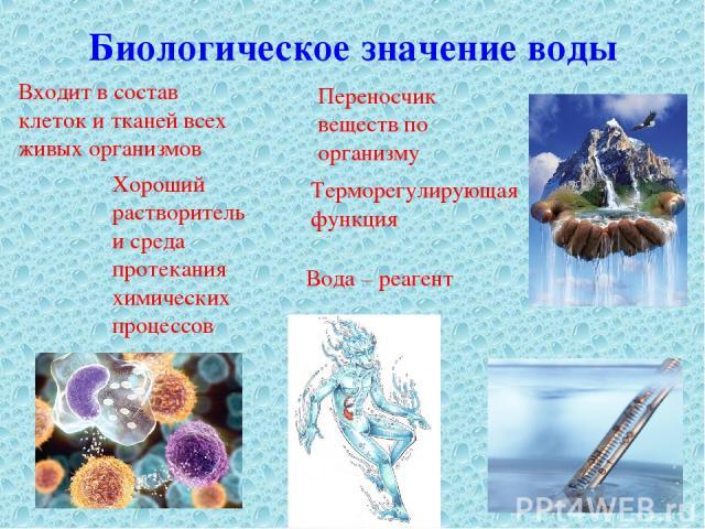 Биологическое значение воды Входит в состав клеток и тканей всех живых организмов Хороший растворитель и среда протекания химических процессов Переносчик веществ по организму Терморегулирующая функция Вода – реагент