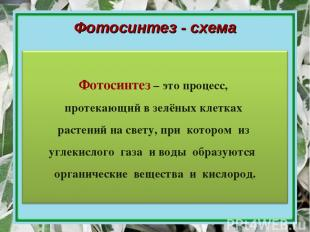 Фотосинтез - схема